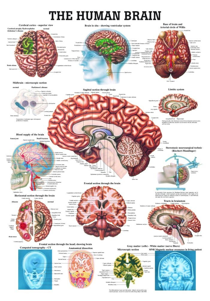 The human brain different introduction diagram