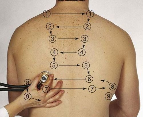 Respiratory assessment auscultation point of patient back diagram