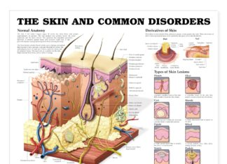 The skin and common disorders diagram
