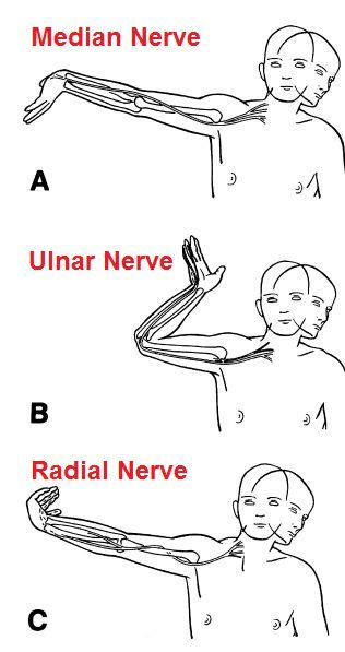Hand wrist position and related nerves diagram