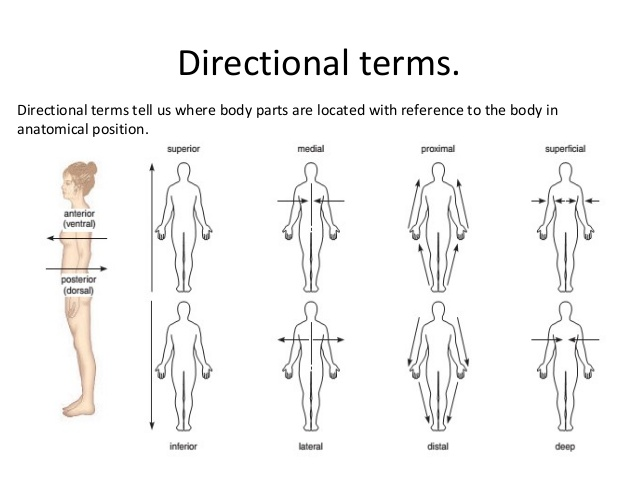 Medical direction terms