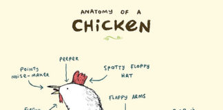 Anatomy of a chicken for kids