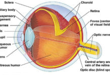 Vitreous humor in the eye anatomy