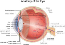 Hyaloid canal of eye anatomy