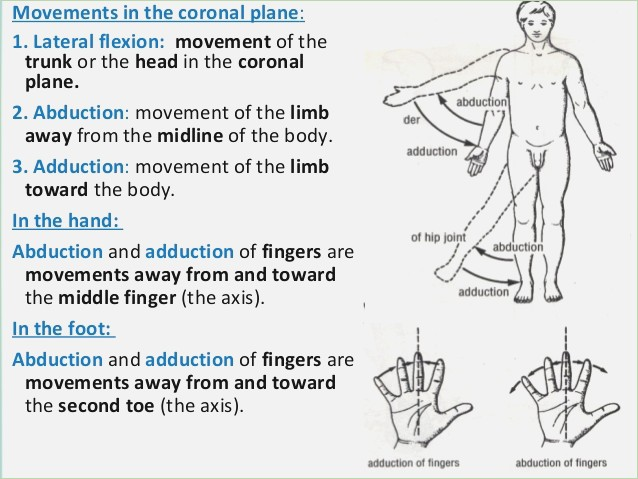 human anatomy definition terms human anatomy medial and lateral