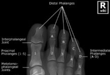 Foot X-ray anatomy