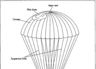 Parachute anatomical structure