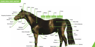 Equine whole body anatomy landmark