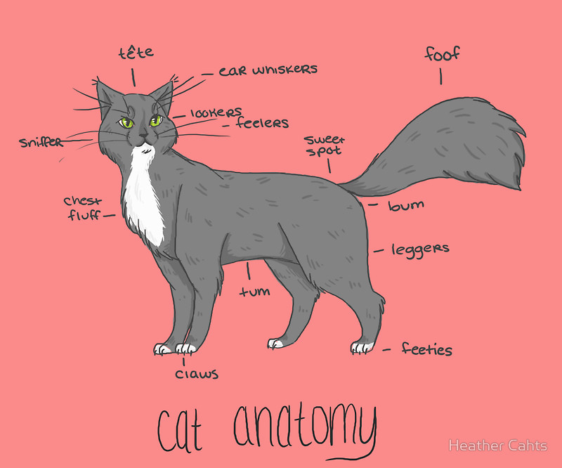Cat anatomy external view