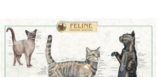 Feline anatomy gross view