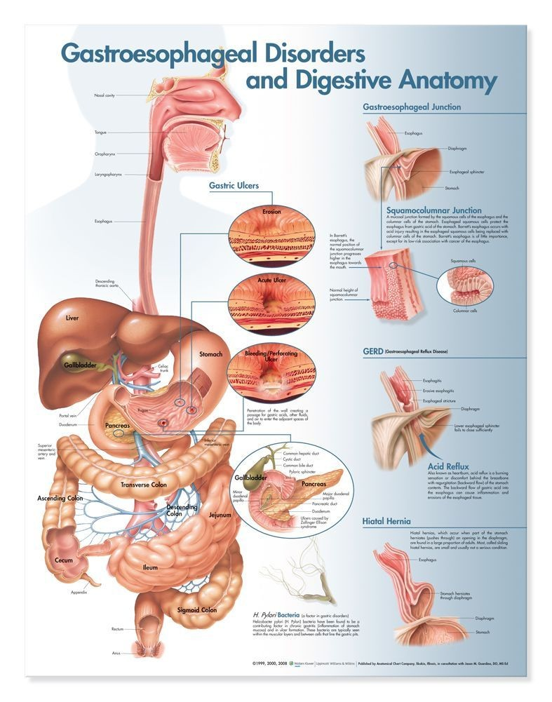 Gastroesophageal disorders and digestive anatomy    diagram