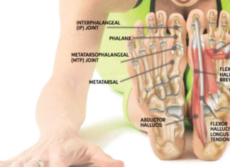 Inferior view of foot bones and muscles anatomy
