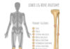 Lower leg bone anatomy