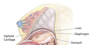 Pregnant woman sectional view with infant in uterus