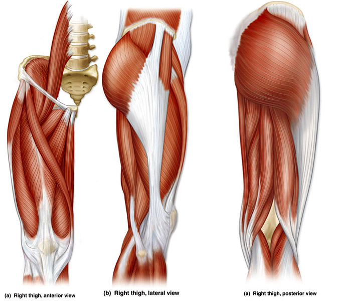 Right thigh anterior view, lateral view, and posterior view