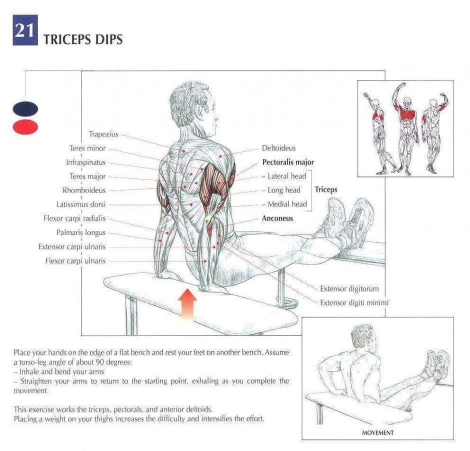 Triceps muscles training diagram