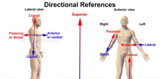 Directional references of anatomical medicine