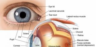 anterior chamber filled with aqueous humor anatomical structure