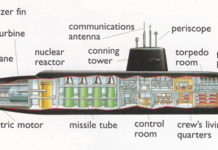 Submarine internal anatomical structure