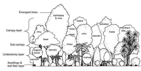 Forest diagram