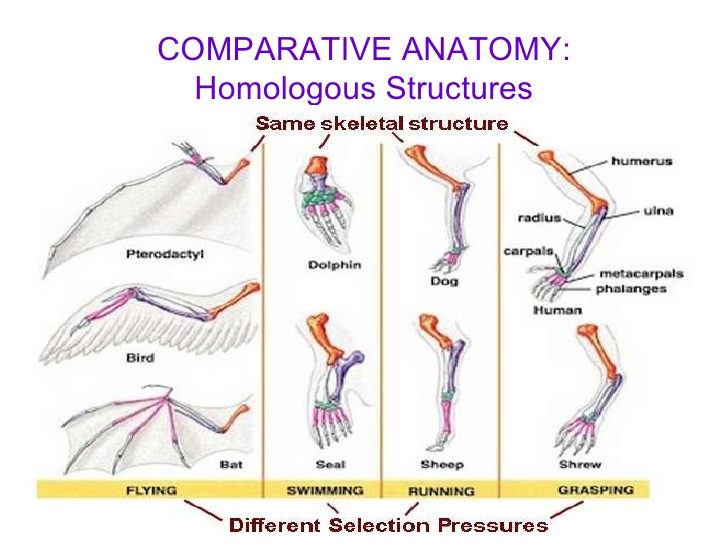 Comparative anatomy between different species extremity structure and function