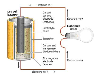 battery anatomical structure