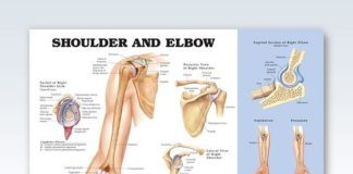 Shoulder and elbow anatomy gross view