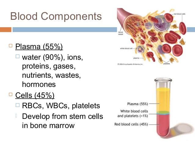 Blood components diagram
