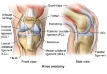 Knee anatomy anterior view and lateral view in detail