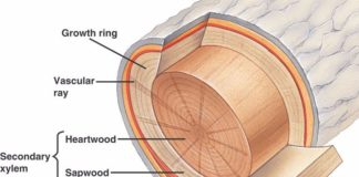 Tree sectional structure in detail layer structure