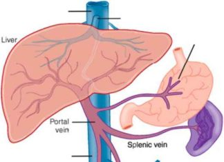 Portal vein and splenic vein anatomy