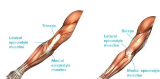 Lateral epicondyle muscles and medial epicondyle muscles anatomy