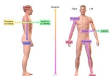Directional references of human body