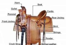 Saddle anatomy