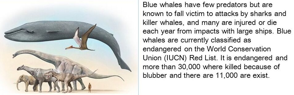 The blue whale and other animals