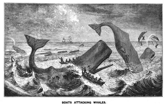 Boats attacking whales picture