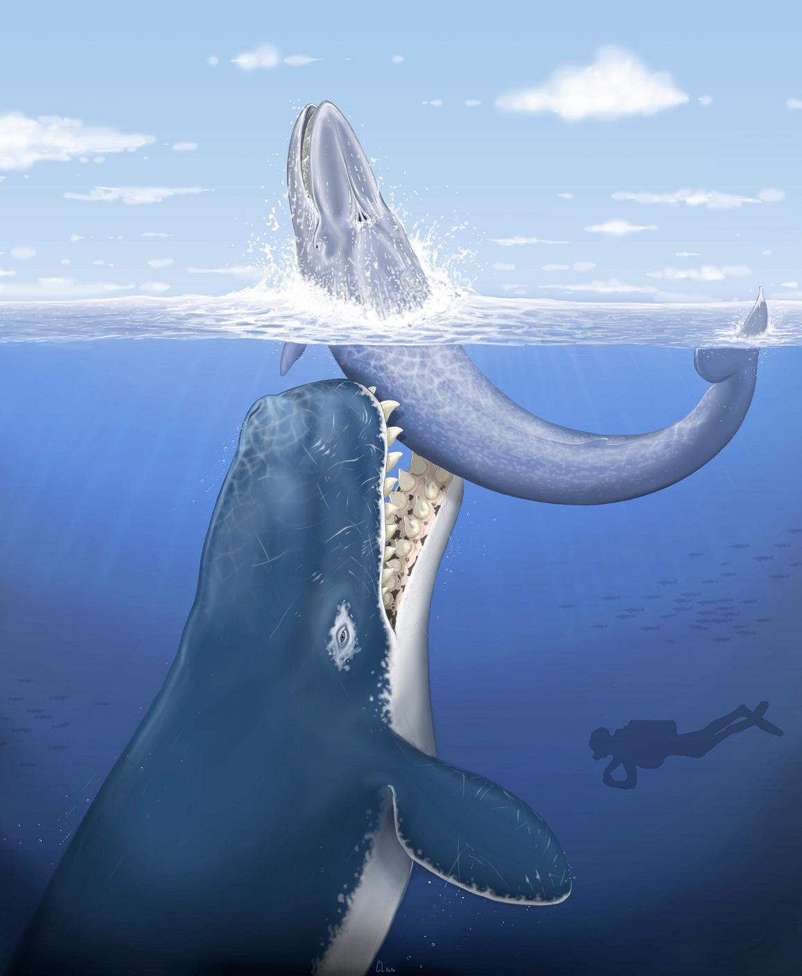 Sperm whale attack blue whale picture