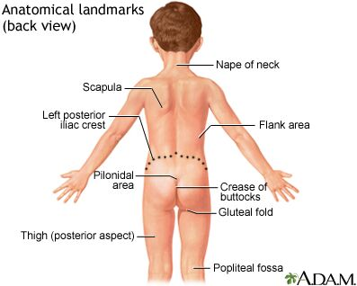 Anatomical landmarks of child back view