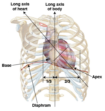 Heart location front view