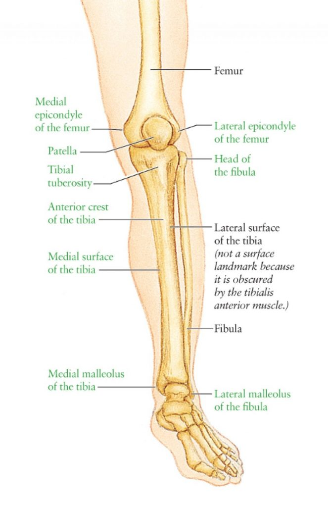 Epicondyle of the knee