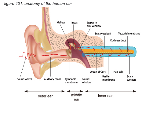 Anatomy and function of the human ear