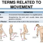 Terms related to the movement of the human anatomy