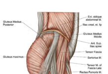 Lateral condyle location in the knee