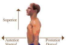 Directional Terms of human anatomy