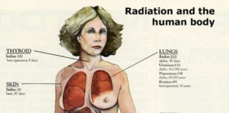 Radiation and the human body
