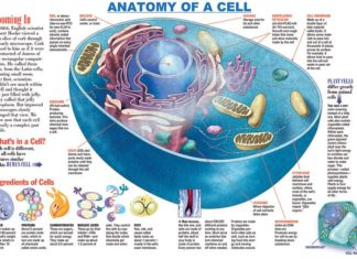 Cell anatomy in detail diagram