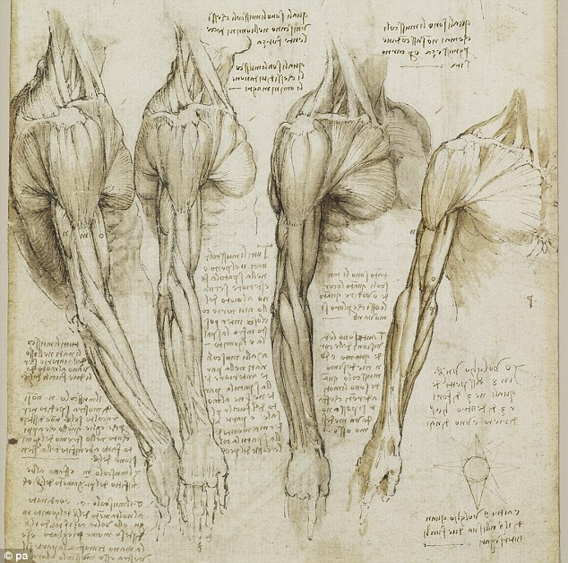 Leonardo Da Vinci shoulder muscle