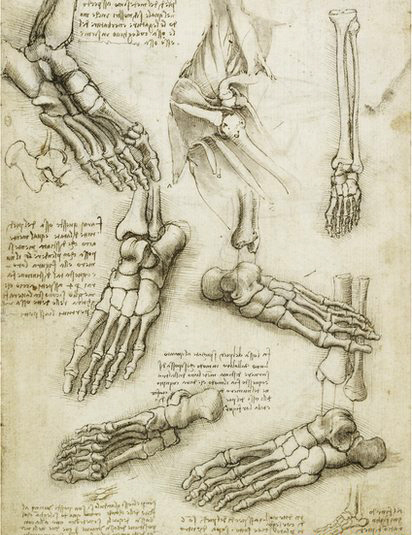 Leonardo Da Vinci foot bone drawing