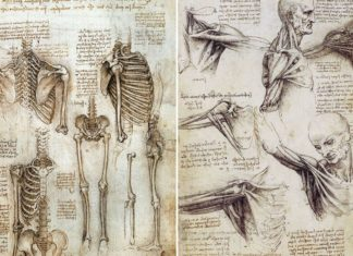 Human skeleton and muscle document diagram