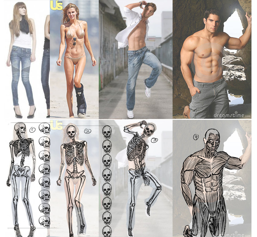 The human body and skeleton diagram
